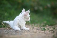 Weiße Katze, die aus den Grund liegt lizenzfreies stockbild