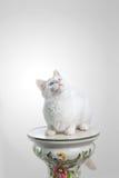 Weiße Katze, die oben schaut Stockfotos