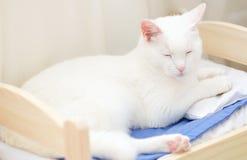 Weiße Katze, die im Bett schläft Stockbilder