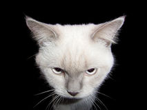 Weiße Katze in einem dunklen Raum Lizenzfreie Stockfotografie