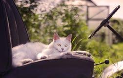 Weiße Katze im Garten Stockbild