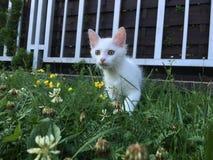 Weiße Katze im Gras Stockfotografie