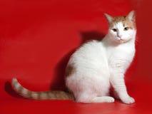 Weiße Katze mit den roten Stellen, die auf Rot sitzen Stockfotografie