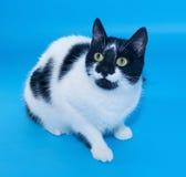Weiße Katze mit den schwarzen Flecken, die das Anstarren sitzen Stockbild