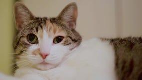 Weiße Katze mit einer roten Stelle stock footage
