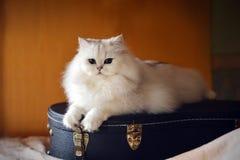 Weiße Katze mit Gitarre lizenzfreie stockfotografie