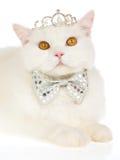 Weiße Katze mit Krone und Gleichheit, auf weißem Hintergrund Lizenzfreies Stockfoto