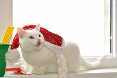Weiße Katze mit rotem Hut Stockfotos