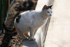 Weiße Katze mit schwarzen Flecken Stockbild