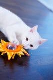 Weiße Katze mit Spielzeug Stockfotos