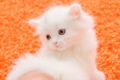 Weiße Katze am orange Teppich Stockbild