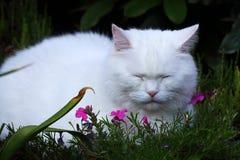 Weiße Katze Schlafens zwischen den Blumen Lizenzfreie Stockfotos