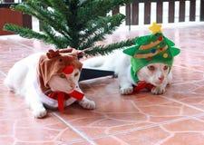 Weiße Katze setzte die grüne Weihnachtsbaumhaube und einen anderen weißen Ca Stockbild