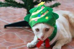 Weiße Katze setzte die grüne Weihnachtsbaumhaube und die Niederlegung neben dem Plastikweihnachtsbaum auf den braunen Boden Lizenzfreies Stockfoto