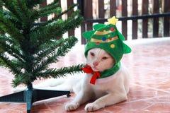 Weiße Katze setzte die grüne Weihnachtsbaumhaube und die Niederlegung neben dem Plastikweihnachtsbaum auf den braunen Boden Stockfotografie