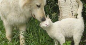 Weiße Katze und weißer Hund, die am grünen Gras spielt