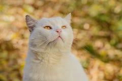 Weiße Katze von einem Schutz Stockbilder
