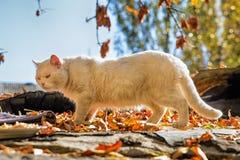 Weiße Katze von einem Schutz Lizenzfreie Stockfotografie