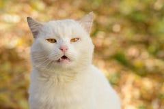 Weiße Katze von einem Schutz lizenzfreies stockbild