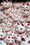Weiße Katzen Stockfotografie