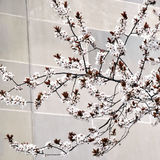 Weiße Kirschblüten mit Exemplarplatz Stockbilder