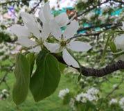 Weiße kleine Blumen Stockbild