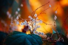 weiße kleine Blumen auf buntem träumerischem magischem gelbem rotem undeutlichem Hintergrund, weicher selektiver Fokus, Makro Lizenzfreies Stockbild