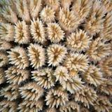 Weiße korallenrote Polypen Stockfotos