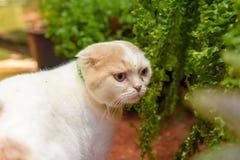 Weiße kurze Ohrkatze im Garten Lizenzfreie Stockfotografie