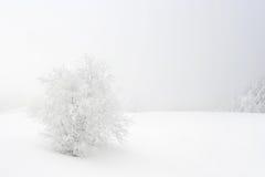 Weiße Landschaft Lizenzfreie Stockfotografie