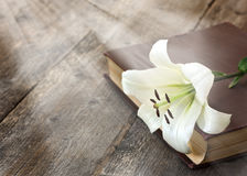 Weiße Lilie auf dem Buch lizenzfreie stockfotos