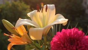 Weiße Lilie in der Brise stock video