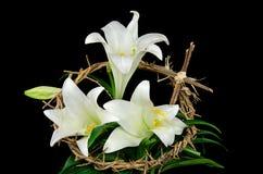 Weiße Lilie mit Dornenkrone Stockfotos