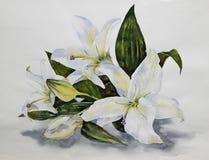 Weiße Lilien auf dem Tisch Stockfotos