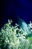 Weiße Lilien der Fotos Lizenzfreies Stockbild