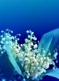 Weiße Lilien der Fotos Stockbilder