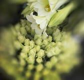 Weiße Lilien und Rosen Stockfotos