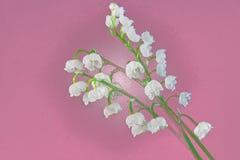 Weiße Maiglöckchennahaufnahme auf einem purpurroten Hintergrund lizenzfreie abbildung