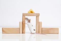 Weiße Maus und Haus Stockfotografie