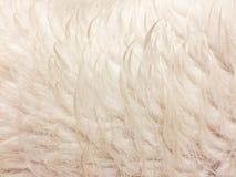 Weiße nasse Pelzbeschaffenheit Stockfotografie