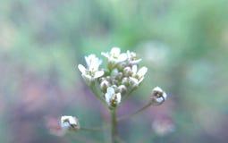 Weiße natürliche Blumen auf einem Grün Stockfotos