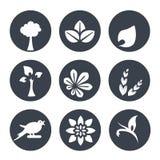 Weiße natürliche Symbole - abstraktes Element der Natur mit Blatt, Baum, Blume, Ährchen und Vogel, organisches Bioübersichtliches Lizenzfreies Stockfoto
