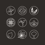 Weiße natürliche Symbole - abstraktes Element der Natur mit Blatt, Baum, Blume und Ährchen, organisches Bioübersichtliches Design Stockbild