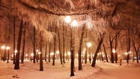 Weiße Niederlassungen von Bäumen im Winter und in der Straßenbeleuchtung Stockbild
