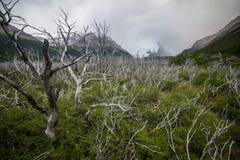 Weiße Niederlassungen von Bäumen mit Büschen Shevelev Stockfotografie