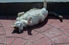 Weiße, obdachlose herum liegende und aalende Katze Stockfoto