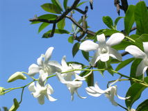 Weiße Orchidee Stockfotos