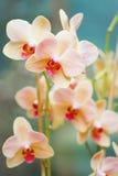 Weiße Orchidee auf dem blauen Hintergrund Lizenzfreie Stockbilder