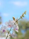 Weiße Orchidee auf Hintergrund des blauen Himmels Lizenzfreie Stockfotografie