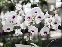 Weiße Orchidee in einem Topf im Garten stockbild